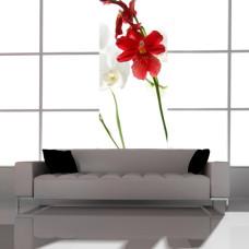 fototapety na szafy kwiaty