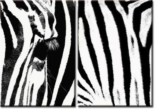 plakaty z zebrą