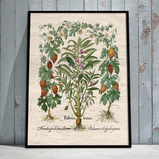 Plakat Rustykalne Rośliny
