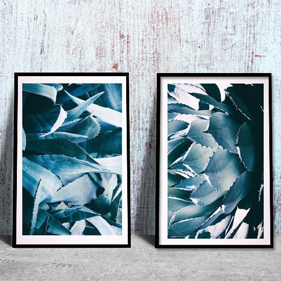 Plakat Dyptyk Z Aloesem I Agawą