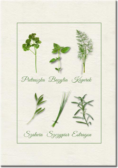 plakaty kolekcja zioła