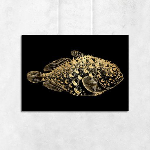 rybka na złotym plakacie