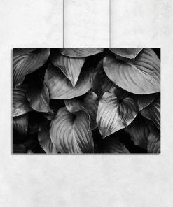 Czarno-biały plakat w liście