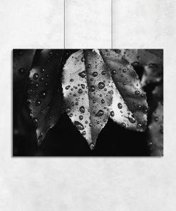 Plakat z motywem kropli wody na liściach