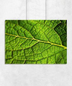 Plakat z liściem w kolorze zielonym