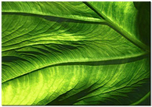 Plakat z zieloną abstrakcją