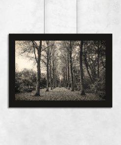 Plakat z drogą i drzewami