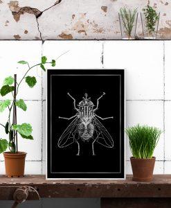plakat z motywem muchy
