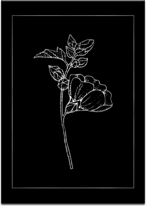 Plakat z motywem kwiatu