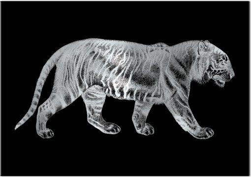 Plakat srebrny z tygrysem