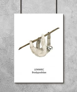 Plakat z leniwcem