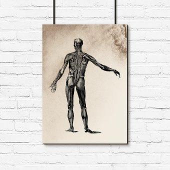 Plakat z anatomicznym motywem