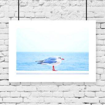 Plakat z morzem i ptakiem
