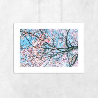 Plakat różowe kwiaty na gałęziach drzew