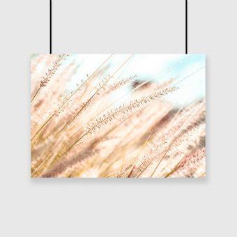 Plakat rośliny łąkowe