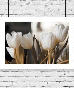 plakat kwiaty tulipanów