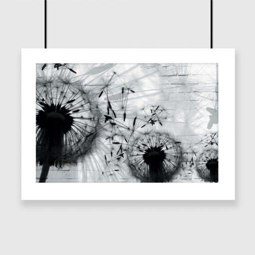 plakat w czarno-białe dmuchawce