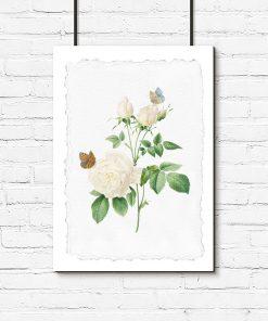 szary plakat z białą różą