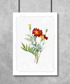 plakat czerwony kwiat
