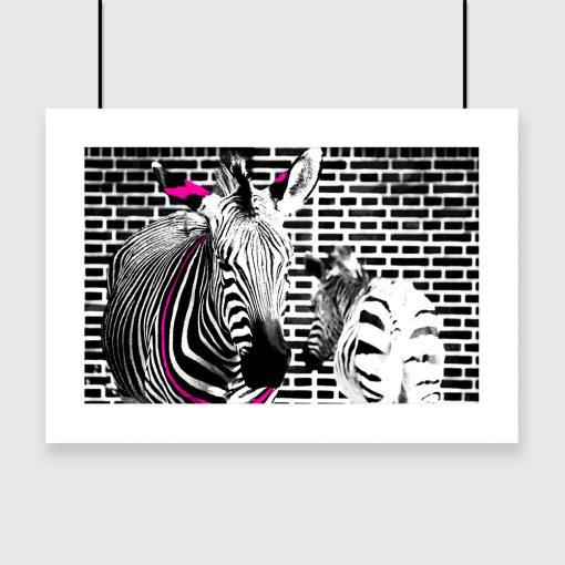 czarno-biały plakat z zebrami