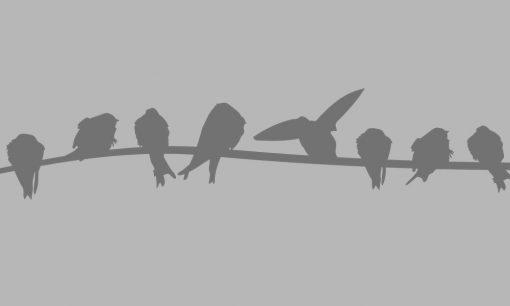 okleina z ptaszkami