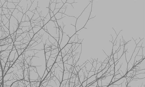folia mrożona