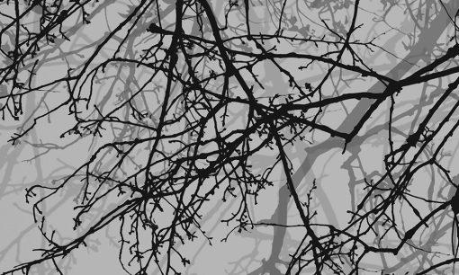 naklejki okienne z gałęziami
