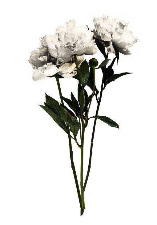 pionowy plakat z kwiatami w bukiecie
