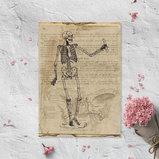 Plakat z anatomią na papirusie
