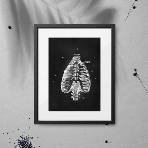 Plakat - Anatomia klatki piersiowej do gabinetu fizjoterapii