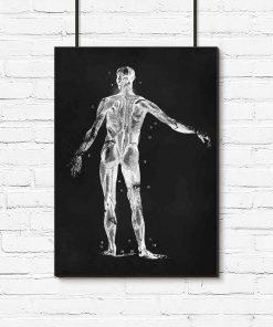 Plakat - Mięśnie człowieka