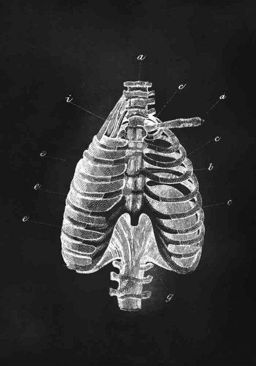 Plakat z klatką piersiową