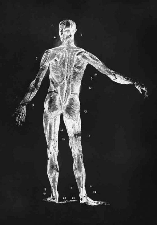 Plakat z anatomią człowieka