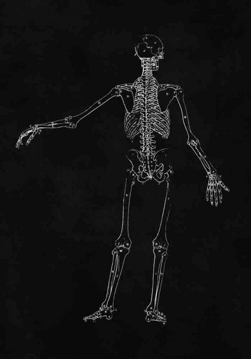 Plakat ze szkieletem człowieka