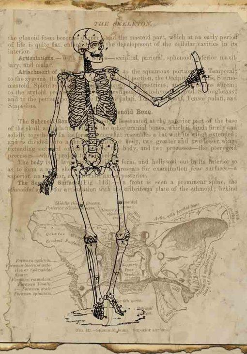 Plakat z motywem szkieletu na papirusie