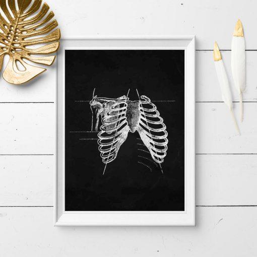 Plakat - Anatomia żeber