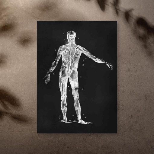 Plakat dla fizjoterapeutów - Anatomia człowieka