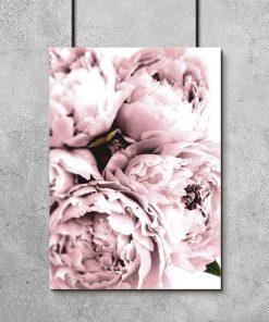 różowa piwonia na plakacie