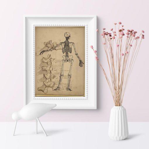 Plakat ze szkieletem dla fizjoterapeutów