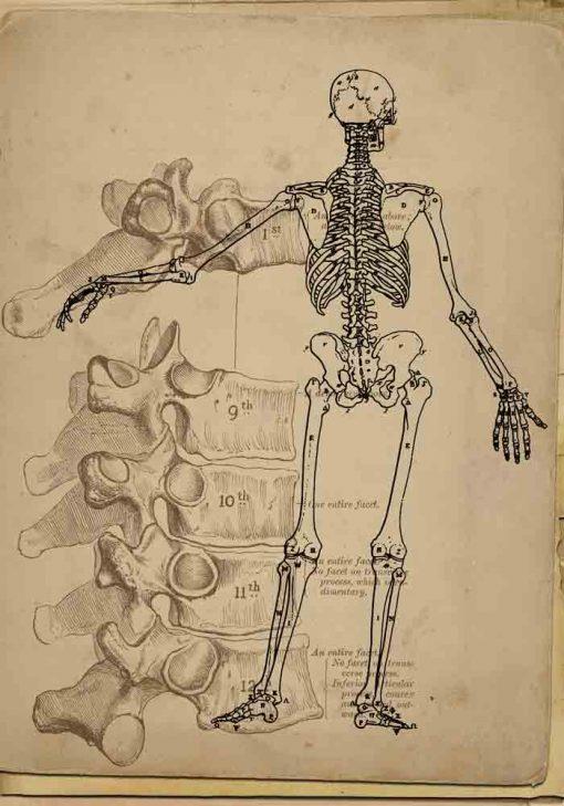 Plakat - Tył szkieletu