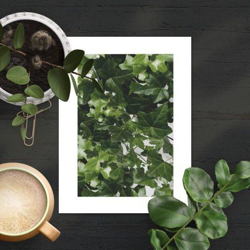 Zielone pnącze na plakacie