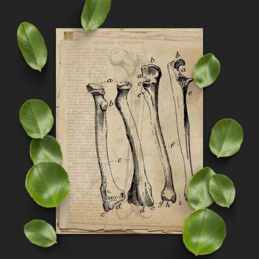 Plakat z kośćmi do gabinetu fizjoterapeuty