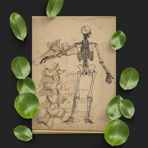 Plakat ze szkieletem do gabinetu fizjoterapii