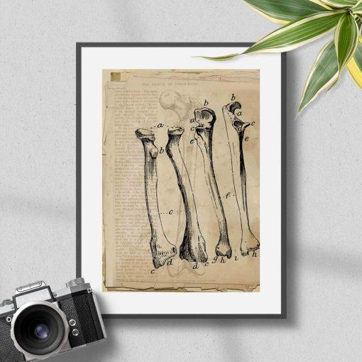 Plakat z kośćmi polecany do gabinetu fizjoterapeuty