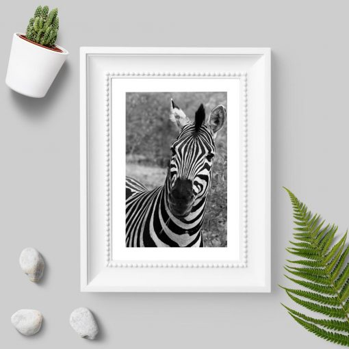Plakat z zebrą pręgowaną do biura