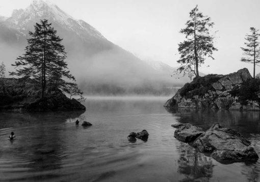 Plakat - Jezioro i drzewa