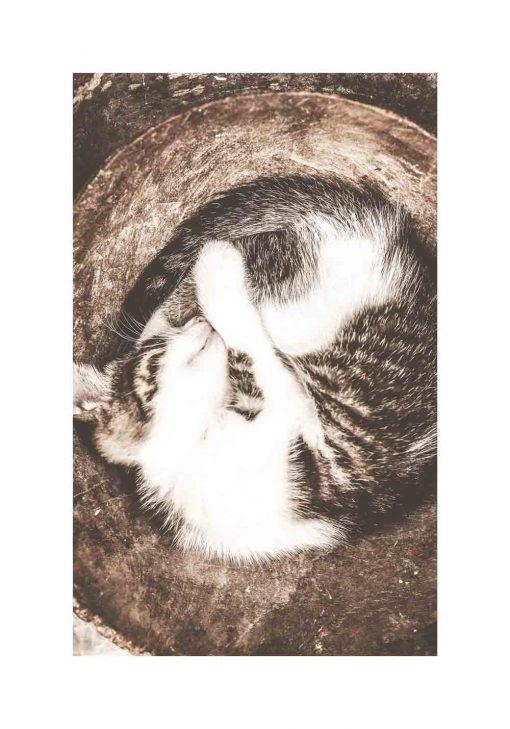 Plakat ze śpiącym kocurkiem w tonacji brązu