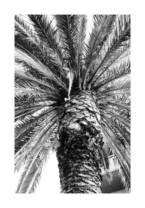 Plakat z palmą