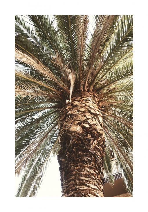 Plakat - Motyw egzotycznej palmy