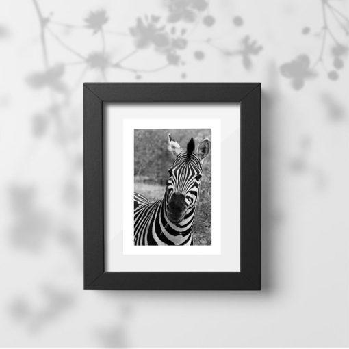 Plakat z zebrą pręgowaną do sypialni